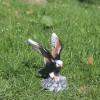 Орел малък