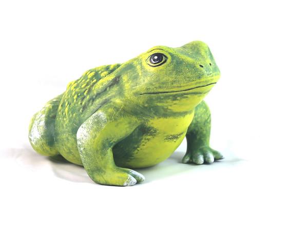 Жаба голяма