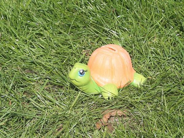 Костенурка каса